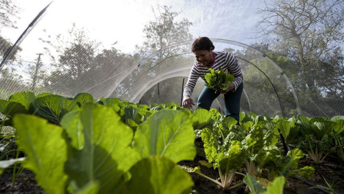 Bring women farmers to the food security table
