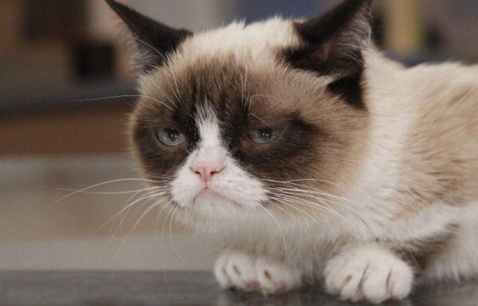 Grump Cat.