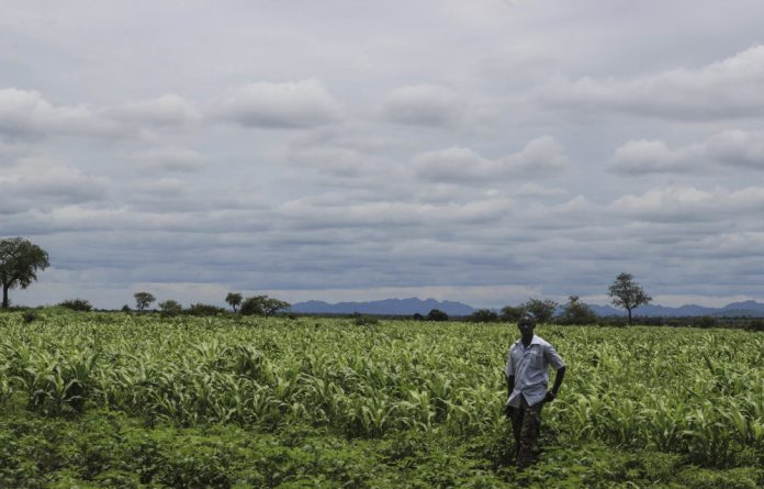 Snatched: About 500 farmers were left landless when the Sudanese government grabbed it to establish the Habilla Agricultural Project