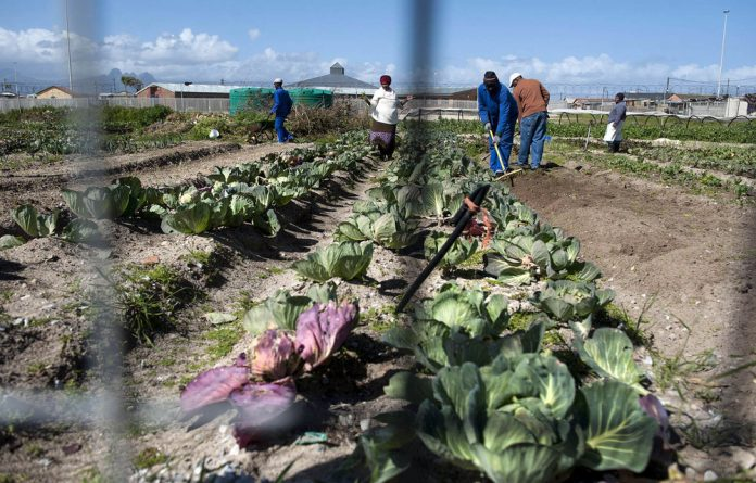 A food garden that was set up by the Abalimi Bezekhaya group in Khayelitsha.
