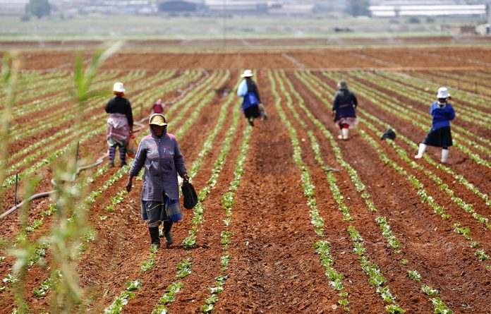 South Africa has the ability to meet national food requirements but for this to happen serious reforms in its agriculture sector are needed.