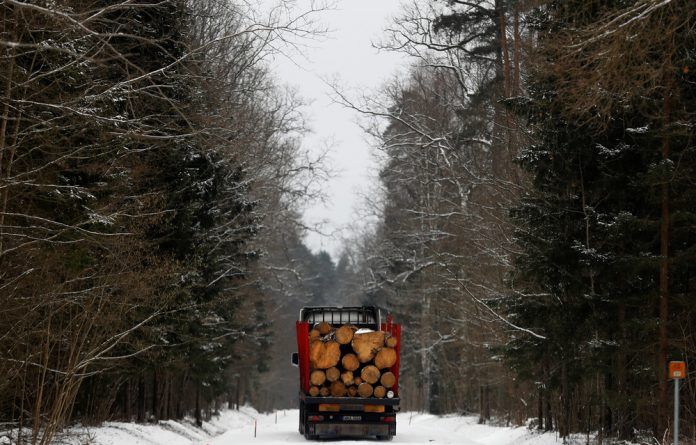 A truck loaded with logged trees is pictured at one of the last primeval forests in Europe