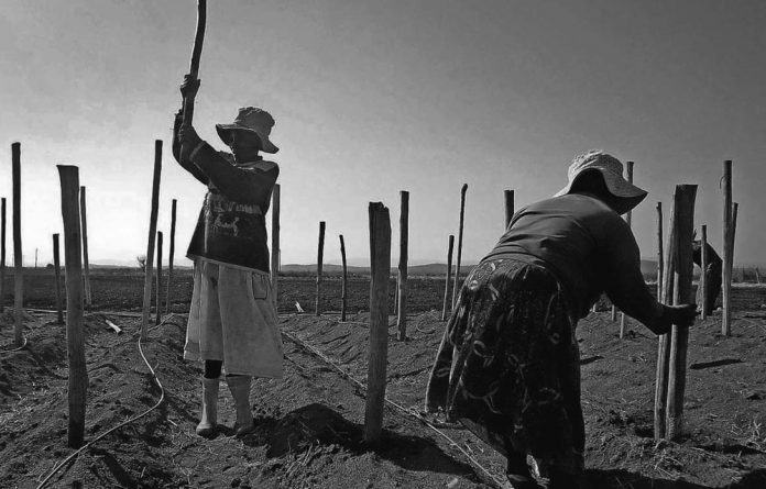 Farmworkers in Limpopo preparing for planting. Agriculture has massive potential for job creation in the province