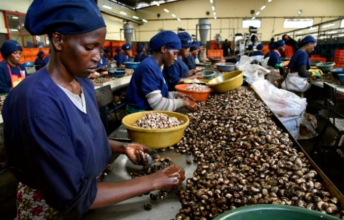 The world's largest cocoa producer