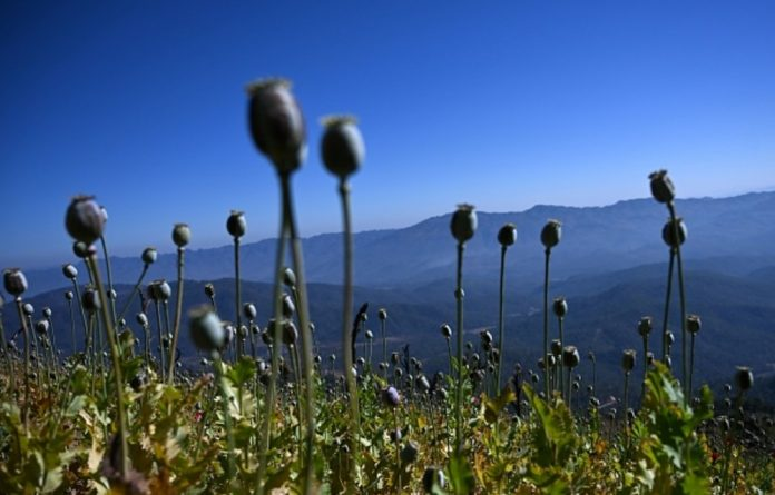 Myanmar is the second biggest source of opium in the world after Afghanistan