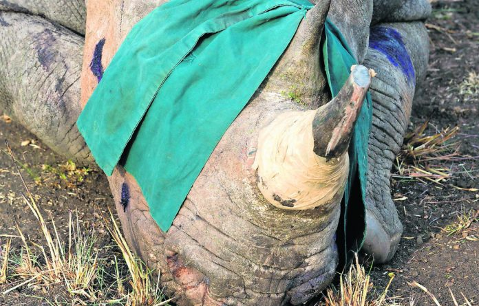 The project increases the range of the critically endangered rhino population.