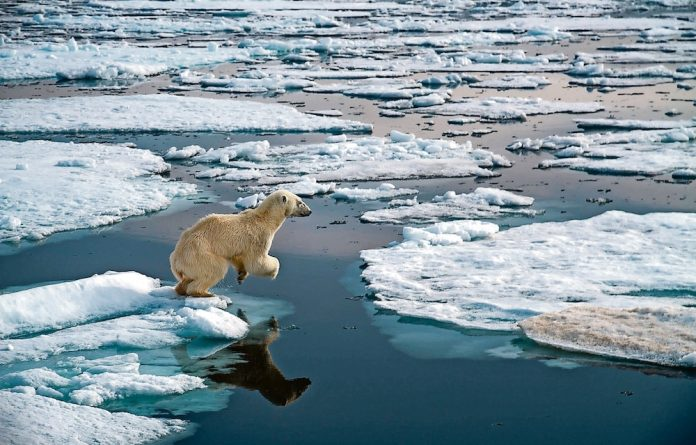 Polar bears adapt their hunting methods to different times of year