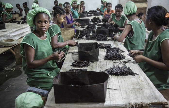 Women sorting sundried black vanilla pods. Thanks to rapidly growing Chinese demand