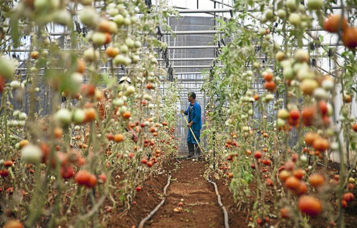 Light work: The growth of labour-intensive organic farming is creating more jobs.