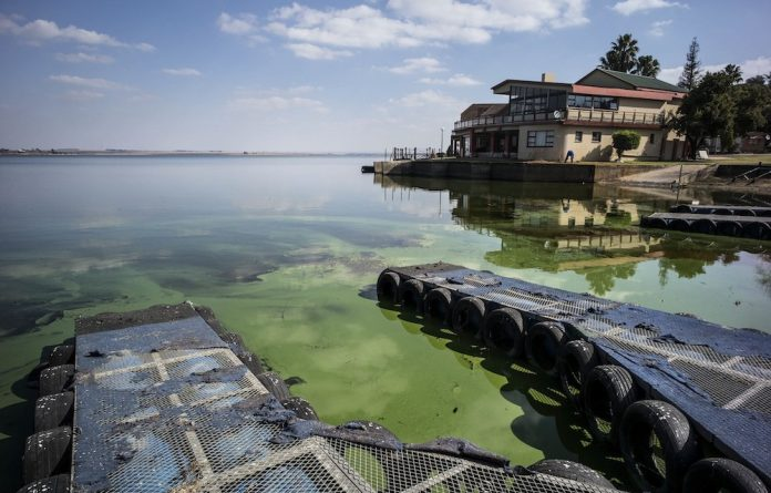 Polluted: The Vaal Dam is choked with algae. Plants