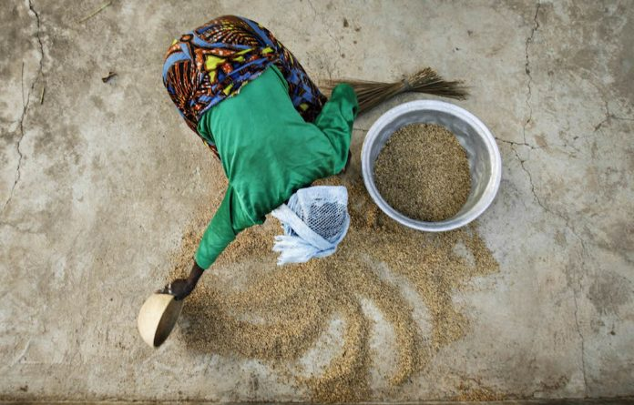 A woman from the Daborin Single Mothers Association gathers rice at a small processing plant in the northern Ghanaian town of Bolgatanga. Almost 800-million men
