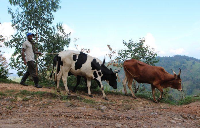A farmer in Rwanda.