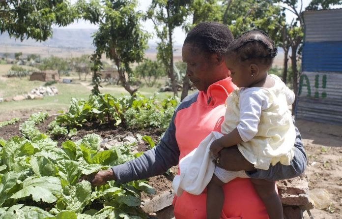 My keyhole garden helps me to grow my veggie seedlings faster, says Matabello Fokotsane