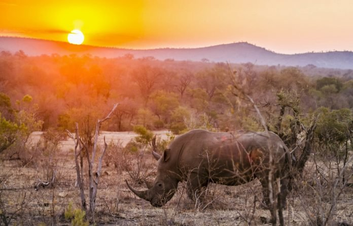 Remote areas are extremely difficult to patrol for poachers