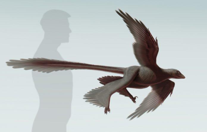 An illustration of an changyuraptor.