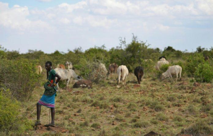 A Kenyan cattle farmer.