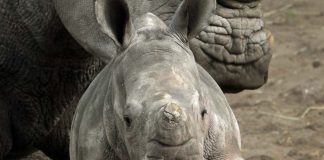More than 360 rhino have been killed by poachers in South Africa since the beginning of this year.