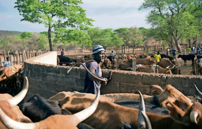 All movement of cattle from the Umzingwane district has been banned in an effort to contain the deadly disease. Farmers have been told to vaccinate their cattle.