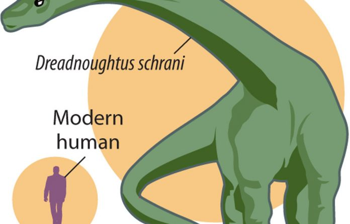 'Dreadnoughtus schrani' weighed more than seven Tyrannosaurus rex dinosaurs.