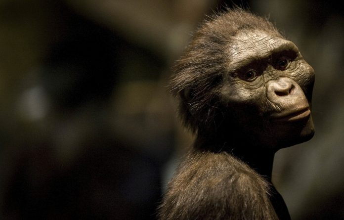 An artist's rendering of Australopithecus afarensis. Lucy ate meat and plants 3.2-million years ago.