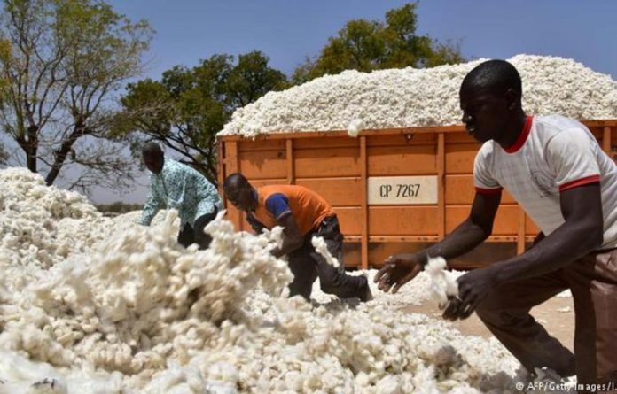 Burkina Faso's cotton companies stopped using genetically modified seeds supplied by Monsanto in 2016