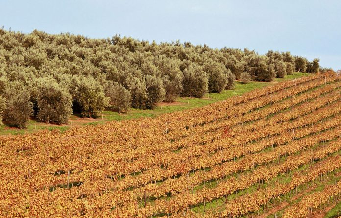 Wine and olive production have gone together since the beginning of time