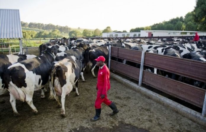 South Africa's international live animal trade has come under fire for brutal transport conditions.