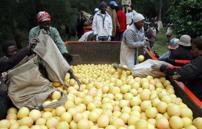 The European Union planned to stop certain imports from South Africa after some shipments of fruit were found to have the citrus black spot disease.