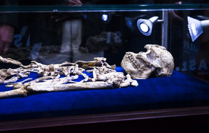 Unearthed: The Little Foot skeleton shown this week after 20 years of effort
