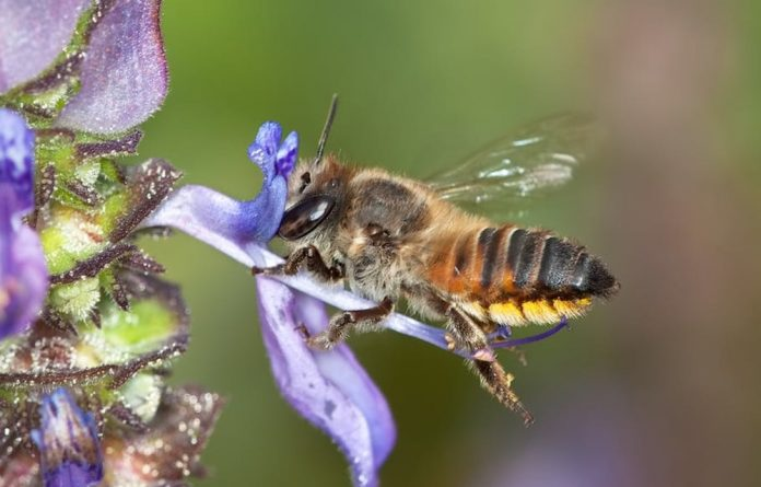 The well-being of pollinators like bees have a direct impact on our lives.