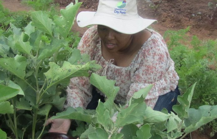Stopping hunger: One garden at a time