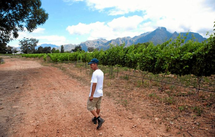 Johan O'Ryan in his vineyards. The Solms Delta farm out near Franschhoek represents in many ways an ideal model for how farm owners & farm workers can co-own the production & continue to co-exist on the land that they are all tied to.
