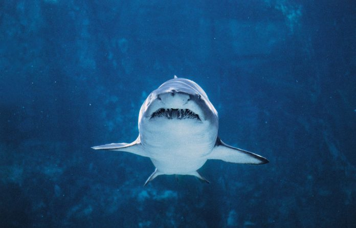 Shark conservation is on the agenda at talks this week.