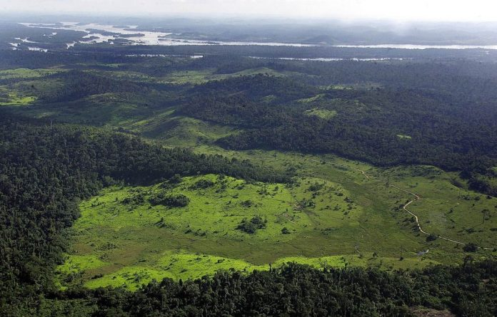 The Amazon rainforest.