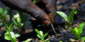 The UK will allow open access to scientific research that benefits farmers.