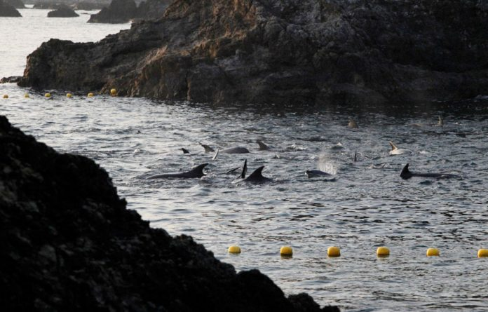Sea Shepherd says the fishermen selected 52 dolphins to keep alive for sale to aquariums and other customers.