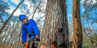 Mozambican Pedro Abilio plies his new trade with his chainsaw