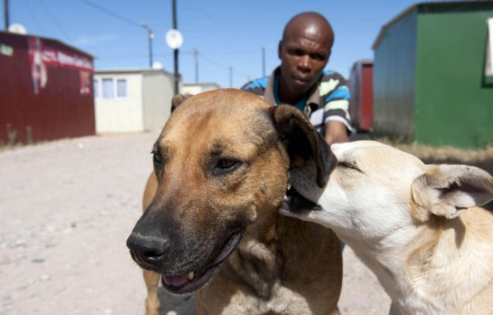 Gauteng won't be introducing a barking bylaw such as the one in Cape Town.
