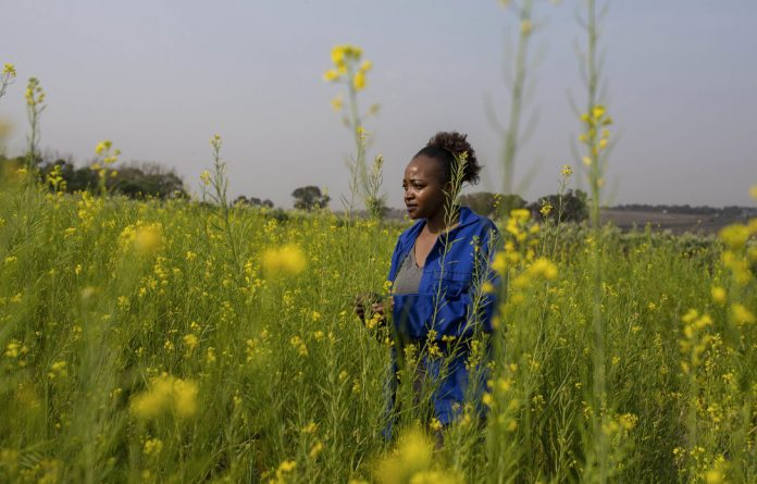 Head space: Dineo Boshomane standing in a field of Chinese spinach