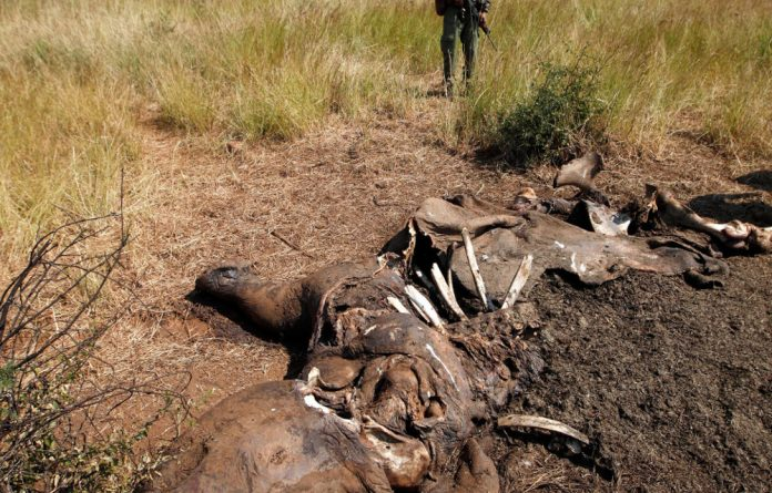 Game farmers are backing a relocation proposal to protect the rhino population from poachers.