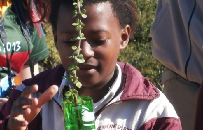 A love of nature is instilled in primary school learners.