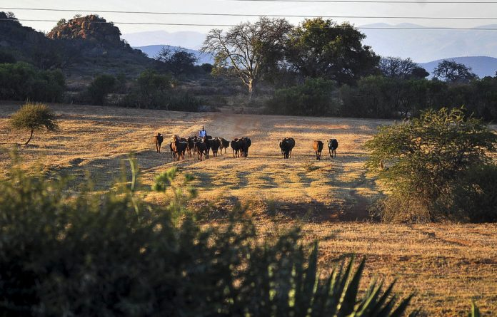 Restitution: In the village of Ga-Masemola in the Sekhukhune district of Limpopo. There are still 1 866 outstanding land claims in the province that were lodged before the original 1998 cut-off date