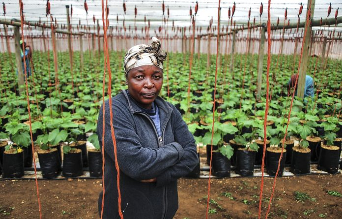 Tebogo Hlangwane wants to increase her production of cucumbers but can't get a loan from the bank because she farms on tribal land and cannot use it as collateral.