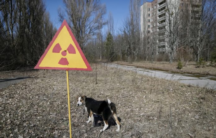 A dog is seen in the abandoned city of Pripyat near the Chernobyl nuclear power plant in Ukraine March 28 2016.