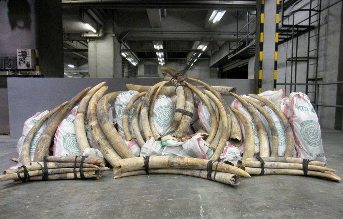 Almost1 500 elephant tusks were illegally imported in pieces of timber to Malaysia