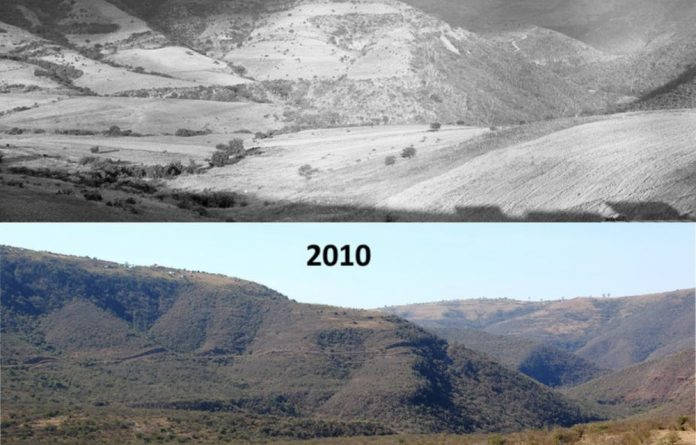 An example of woody plant encroachment over Eagle-Siding in South Africa's Eastern Cape province. D Edwards
