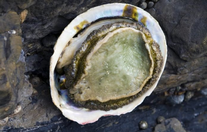 The value of abalone increased as it moves from traffickers and later to overseas wholesalers.