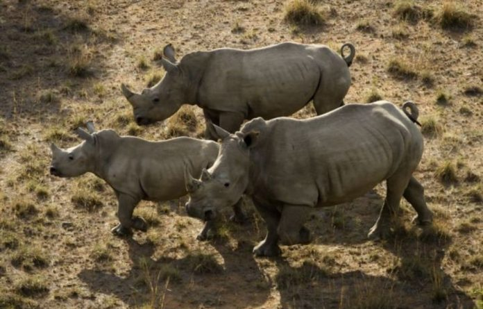 Around 400 rhinos have been killed this year in the world-famous Kruger National Park