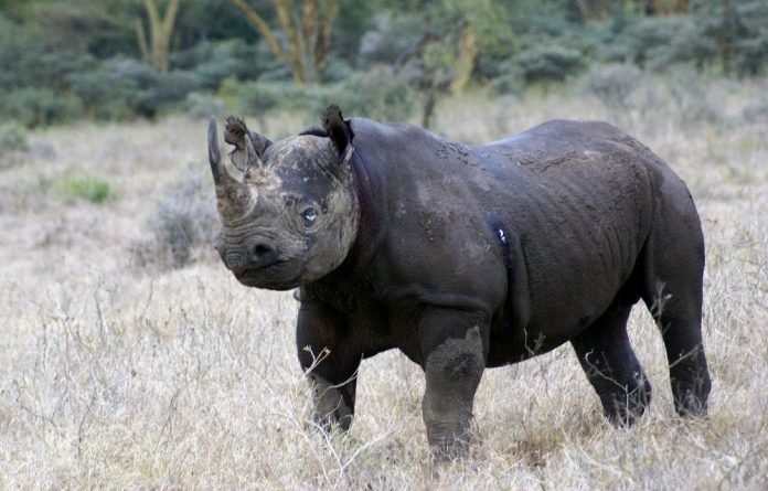 Kenya is home to about 850 black and white rhino.