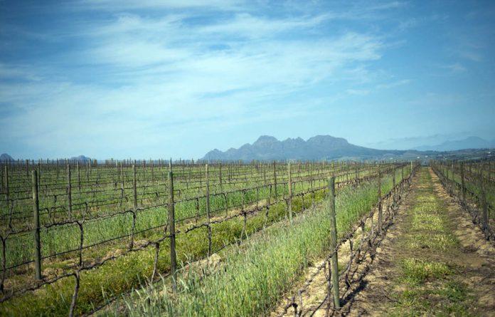 Neethlingshof Estate wine farm in Stellenbosch.